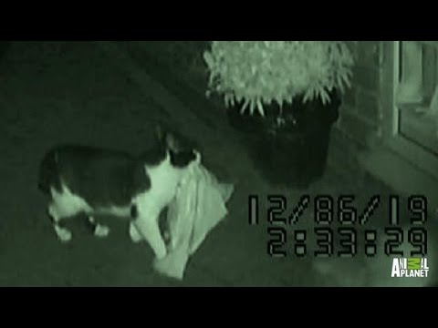 Dennis the Thieving Cat | Bad Dog!