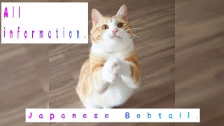 Japanese Bobtail. Pros and Cons, Price, How to choose, Facts, Care, History