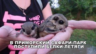В ПРИМОРСКИЙ САФАРИ-ПАРК ПОСТУПИЛИ БЕЛКИ - ЛЕТЯГИ