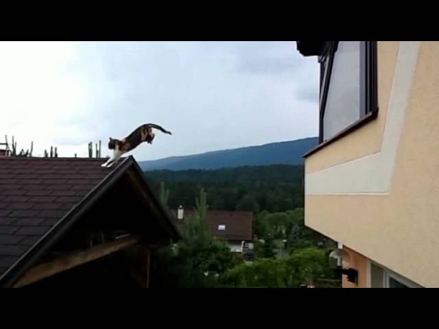 Incredible ultra slow motion 7 feet cat jump