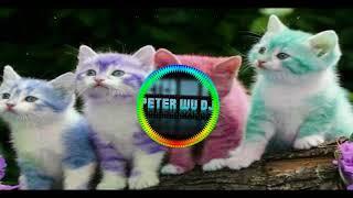 Gambar cover Xue Mao Jiao [学猫叫] Remix 2018 With Peter Wu Dj