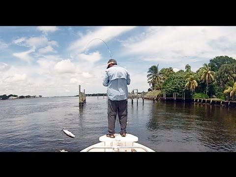 South Florida Stuart - Fly Fishing for Jacks - HD # 30