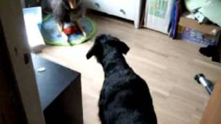 Riesenschnauzer Growling At A Sheep - A Wooden Toy Sheep For Kids...