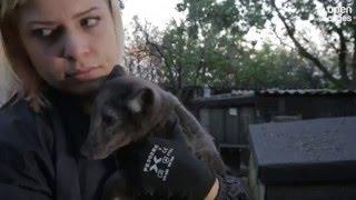 Fox cubs rescued from a fur farm in Poland