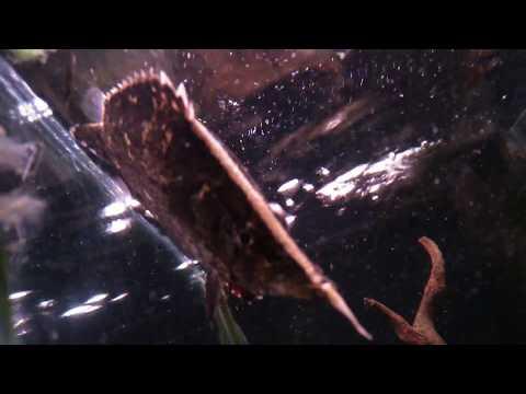 熱帯魚動画図鑑リーフフィッシュ