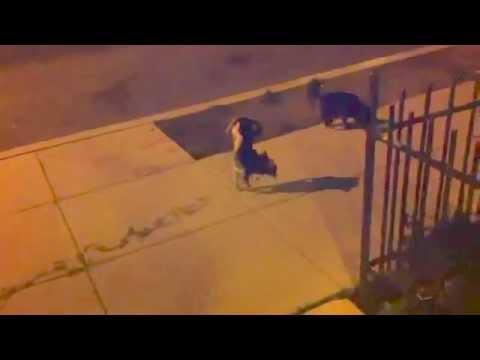 dog walking awesome