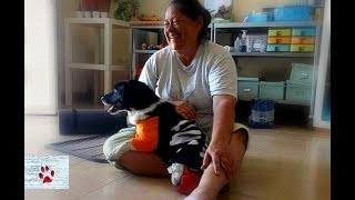 Thriving in two legs - Dodo, the dog that lost everything