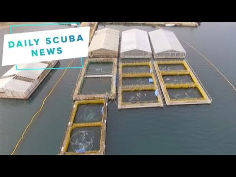 Daily Scuba News - Orcas and Belugas in icy jail