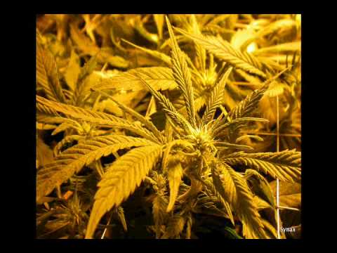 Tanya Stephens feat. Gammy - It's a pitty (remix) - with highest quality ganja photos slideshow