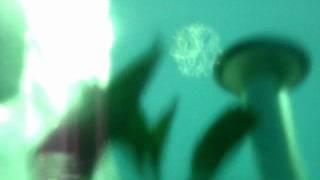 Alucinación- Tano Viamonte y los Santitos Desvelados
