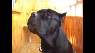 Прикол! Говорящая собака 4