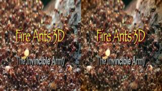 Fire Ants 3D documentary [Official Trailer]
