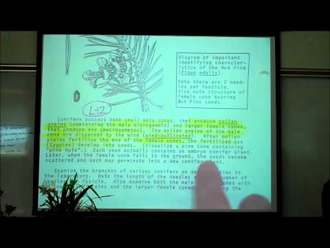 PLANT KINGDOM; TERRESTRIAL PLANTS & TREES by Professor Fink.wmv