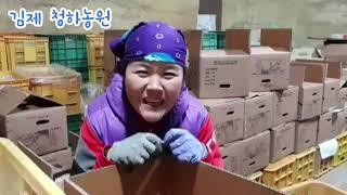 김장철 사과,배 판매하는 청하농원-밤을 잊은 과수원집 …