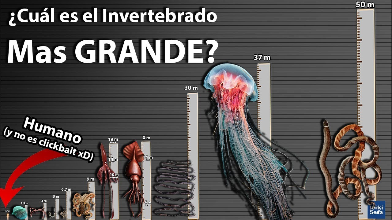 El Invertebrado más largo