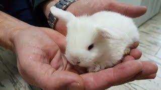 VLOG Кролики бегают. Утро маленьких крольчат