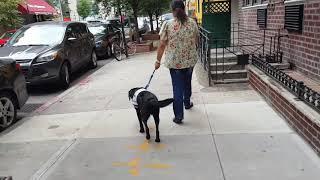 Overcoming Fear of Dogs Program - Melanie's first dog walk