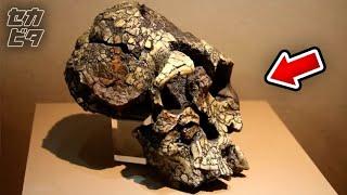 近年、判明した驚愕の古生物学的発見ほか11選