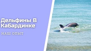 Дельфины В Море Кабардинки