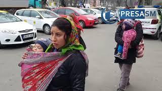 Invazie de cersetori in municipiul Satu Mare
