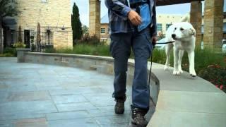 Tinker The Akbash | Redeeming Dogs | Dfw Dog Training