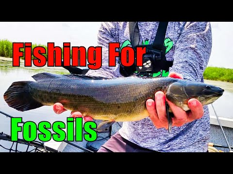 Chasing Dogfish (Bowfin) With Todays Angler