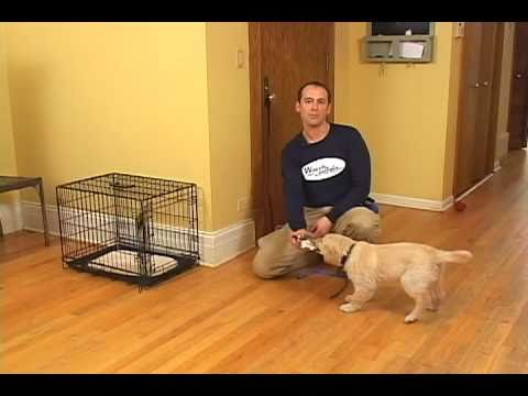 Jeff Millman Dog Training  Puppy Housetraining  Using and sizing a crate