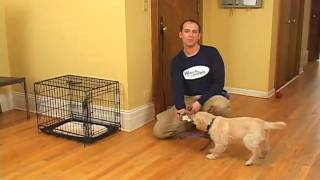 Puppy Housetraining - Using And Sizing A Crate