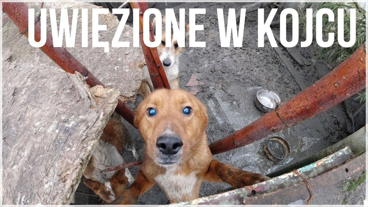 Trzy psy uwięzione w kojcu. Interwencja OTOZ Animals Warszawa.