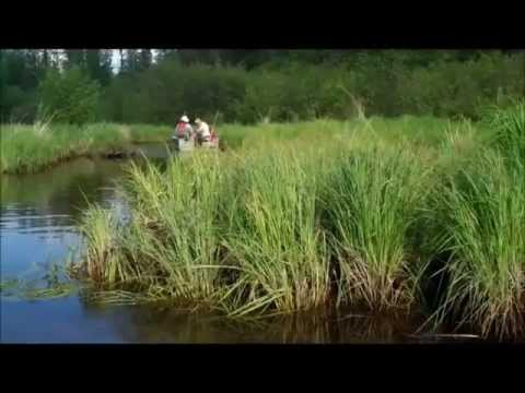 Wapesi Lake Ontario South Camp