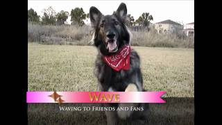 Shakti's Amazing Dog Tricks - Intermediate Level