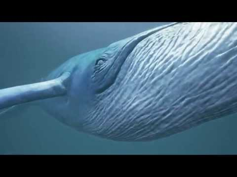 Blue Whale Cinematic