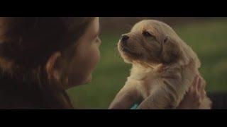 comercial emocionante amizade garota e cachorro 2014 chevy comercial maddie