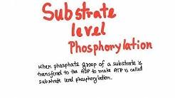 Glycolysis: substrate level phosphorylation