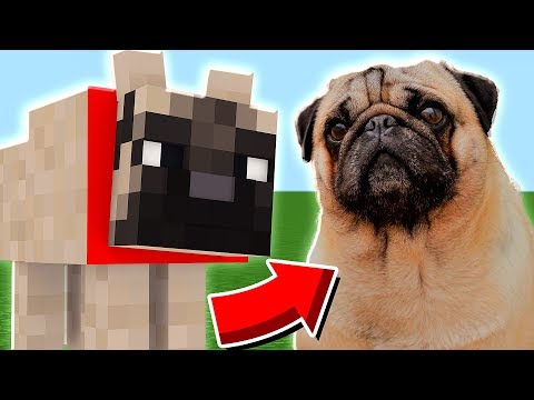 ENCONTREI O SHAKE DENTRO DO MINECRAFT !! ( Minecraft Pug )