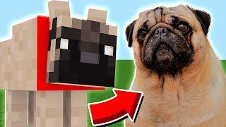 ENCONTREI O SHAKE DENTRO DO MINECRAFT !! ( Minecraft Pug )