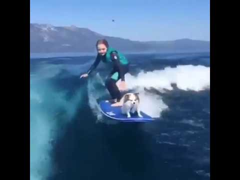 Sierra Kerr And Her Surfing Dog
