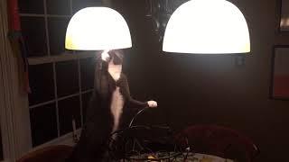 Cat Pratfall