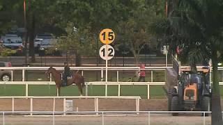 Vidéo de la course PMU PREMIO JARDIM BOTANICO (INTERNET)