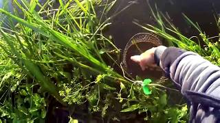 СОЖ.РЫБАЛКА НА РАКУШКУ В ПРОВОДКУ/FISNING the FISH  on the SHELL