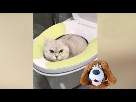Animais engraçados - Cães e gatos engraçados