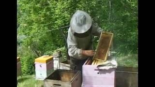 Пчёлки-1. Расширение гнезда.