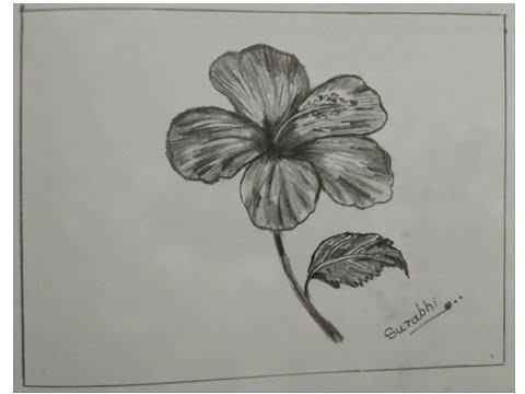 pencil-drawing-images-of-flower