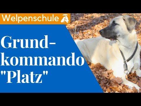Platz, so lernt dein Hund das Kommando Platz / Mia and Me DogTV