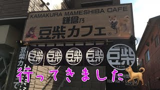 鎌倉の豆柴カフェに行ってきました🐕 黒柴犬の双子姉妹