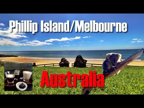Beautiful Beaches and Cute Koalas! Phillip Island and Melbourne Australia Adventure Day 5