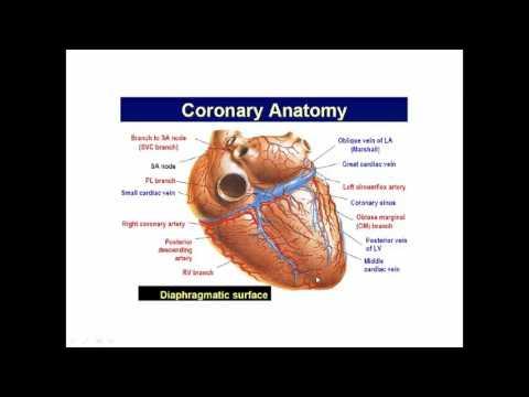 Basic Coronary Angiography (part 1)