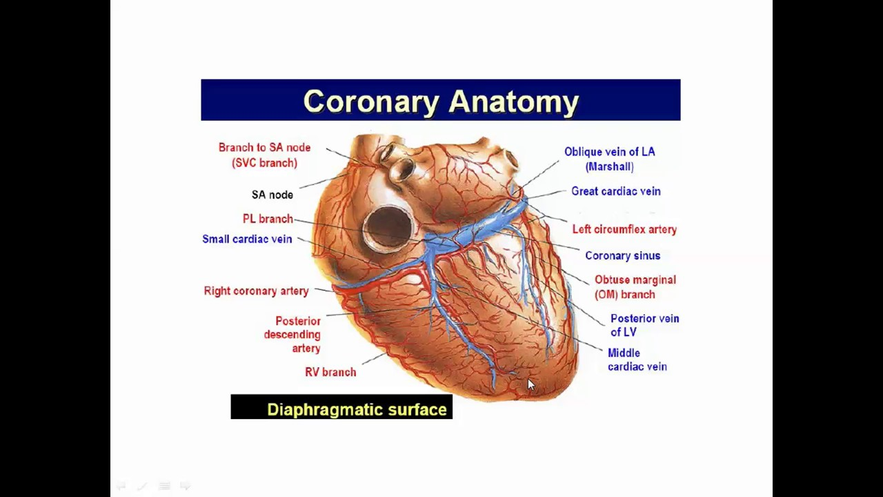 Basic Coronary Angiography Part 1 Youtube