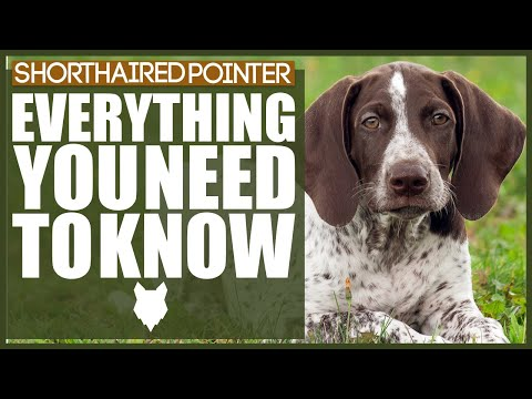 GERMAN SHORTHAIRED POINTER 101! Everything You Need To Know About The German Shorthaired Pointer