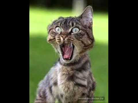 komik kedi sesi